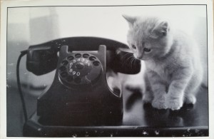 Tag-cat-20150622 (1)